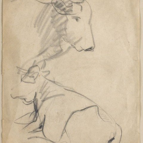 Sketches of Cows by William Sommer