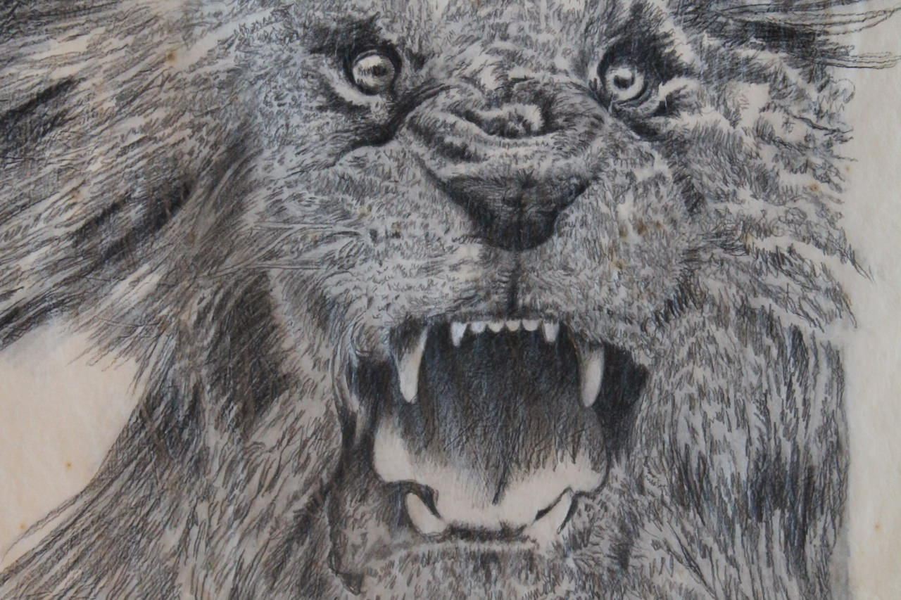 Finished Study for Over and Above: Lion by Clarence Holbrook Carter